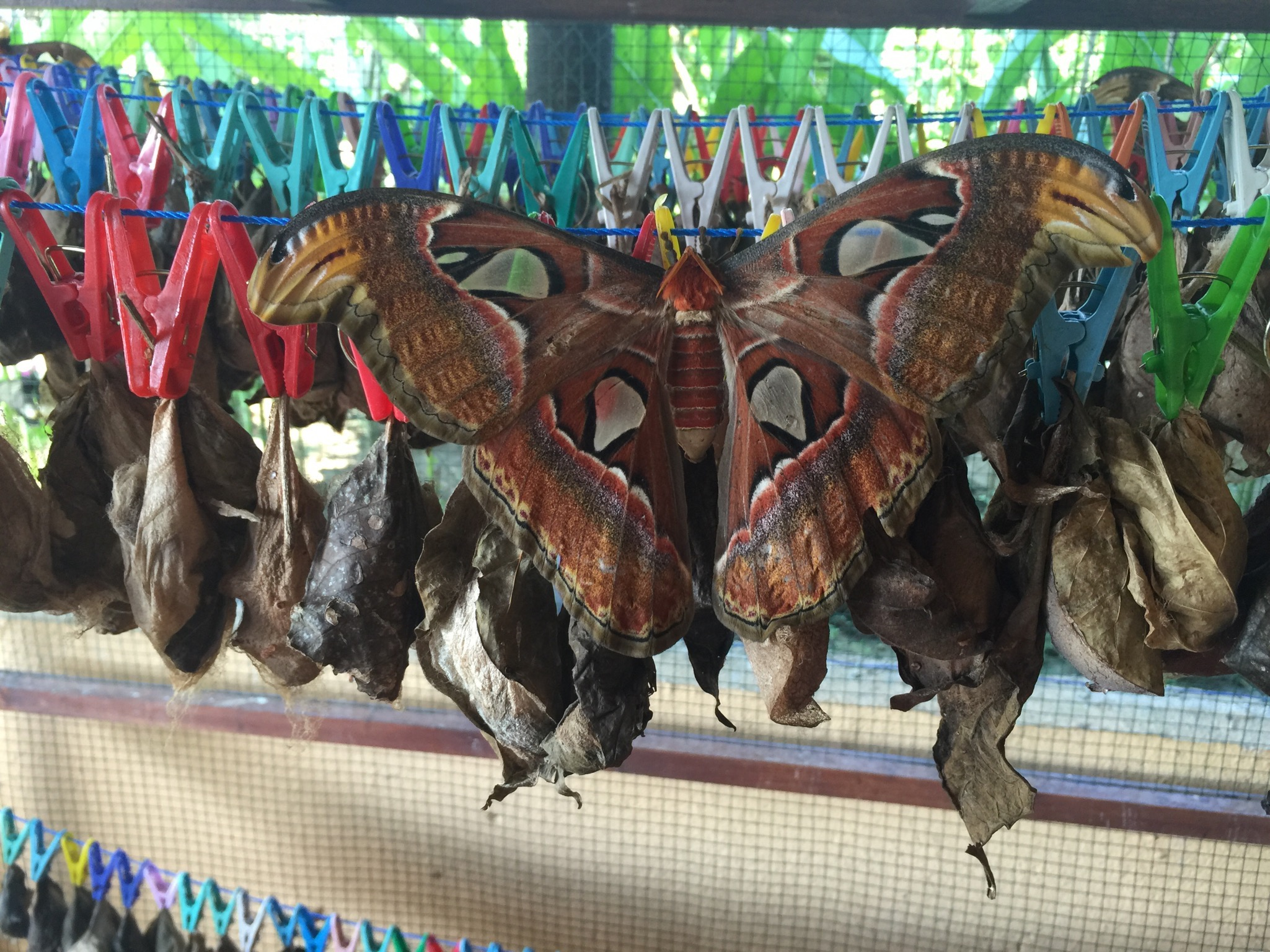 Kemeh Butterfly Park